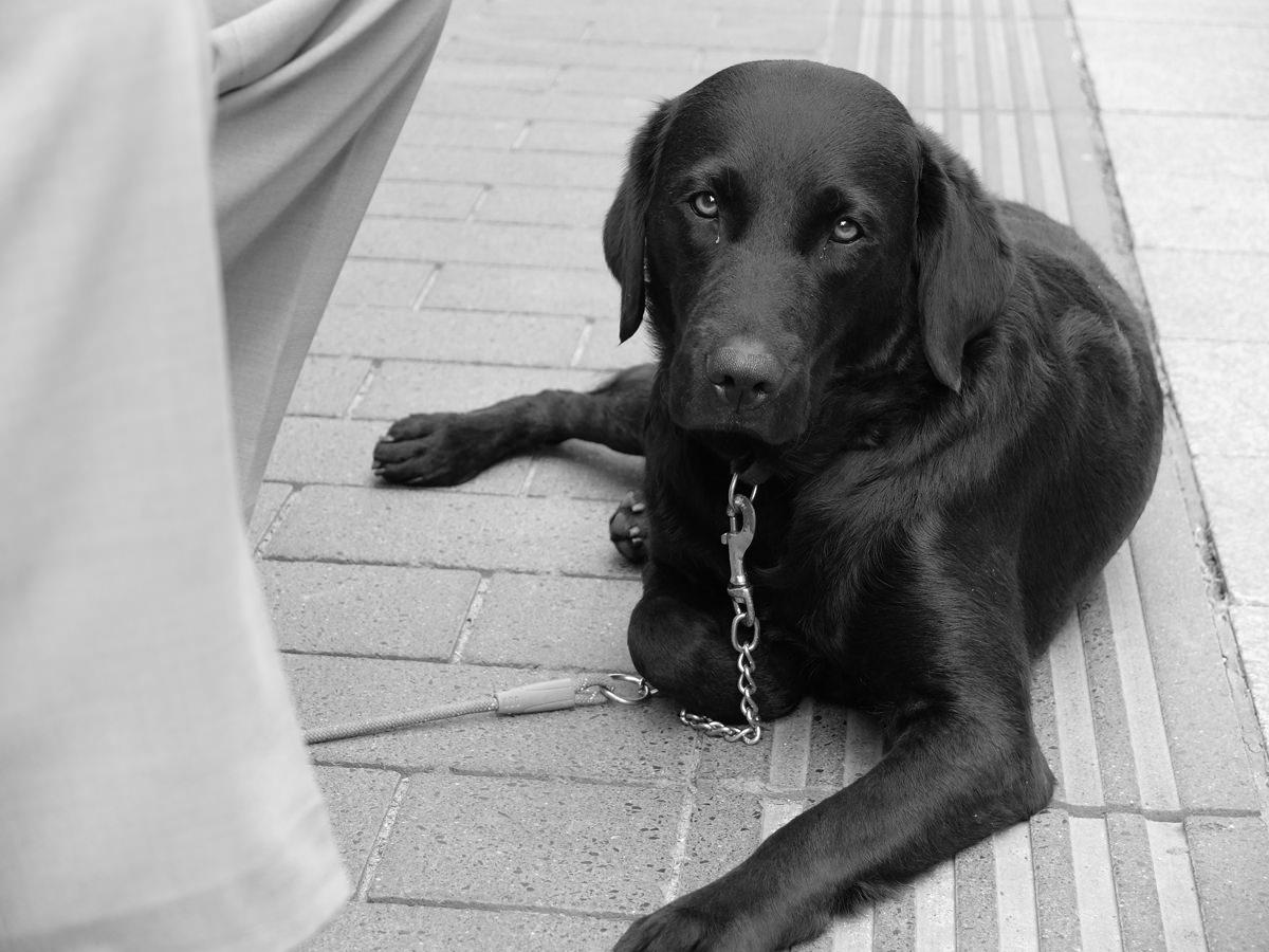 Hund in Leipzig