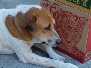 Thailands-Hunde-03