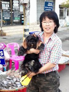 Thailands-Hunde-06