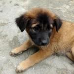 Strassenhund Asien Thailand