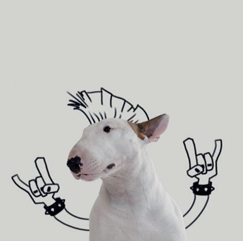 Ein Hund namens Jimmy - 07