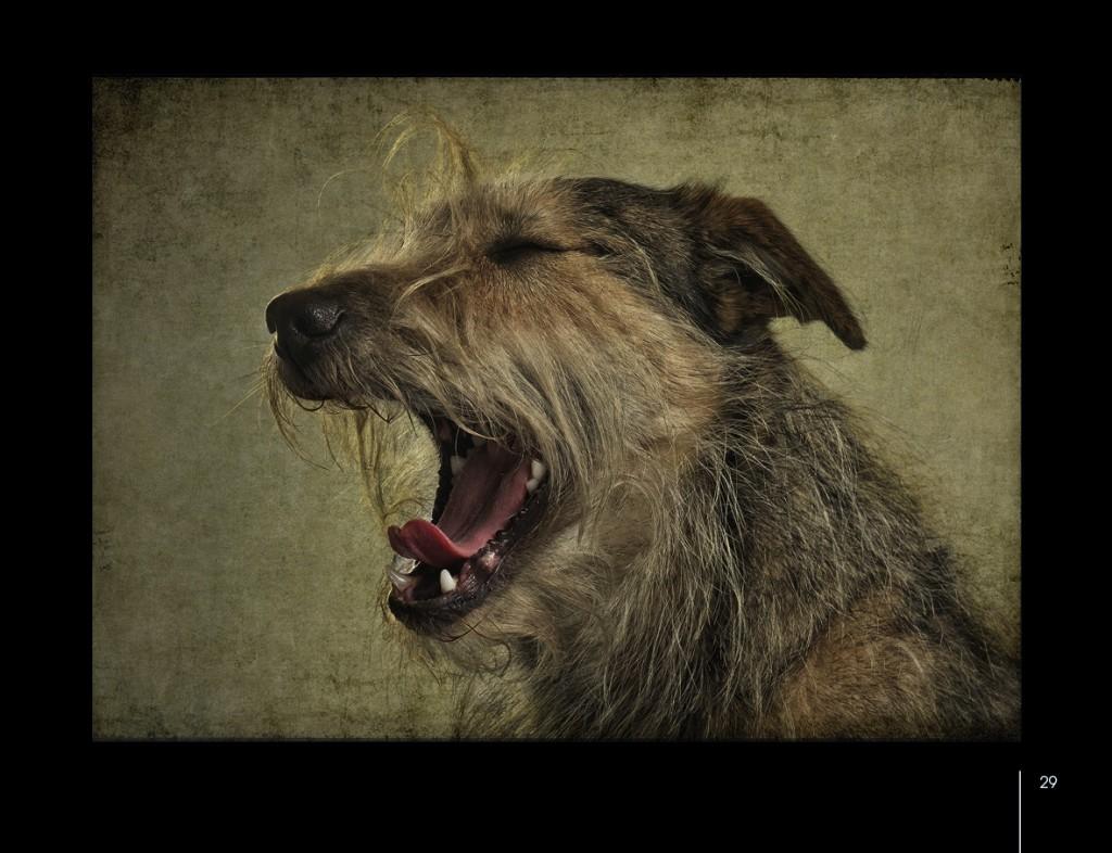 Hunde von Uli Stein-01