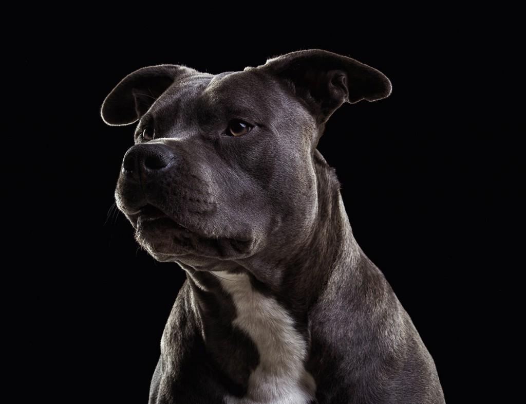 Hunde von Uli Stein-03