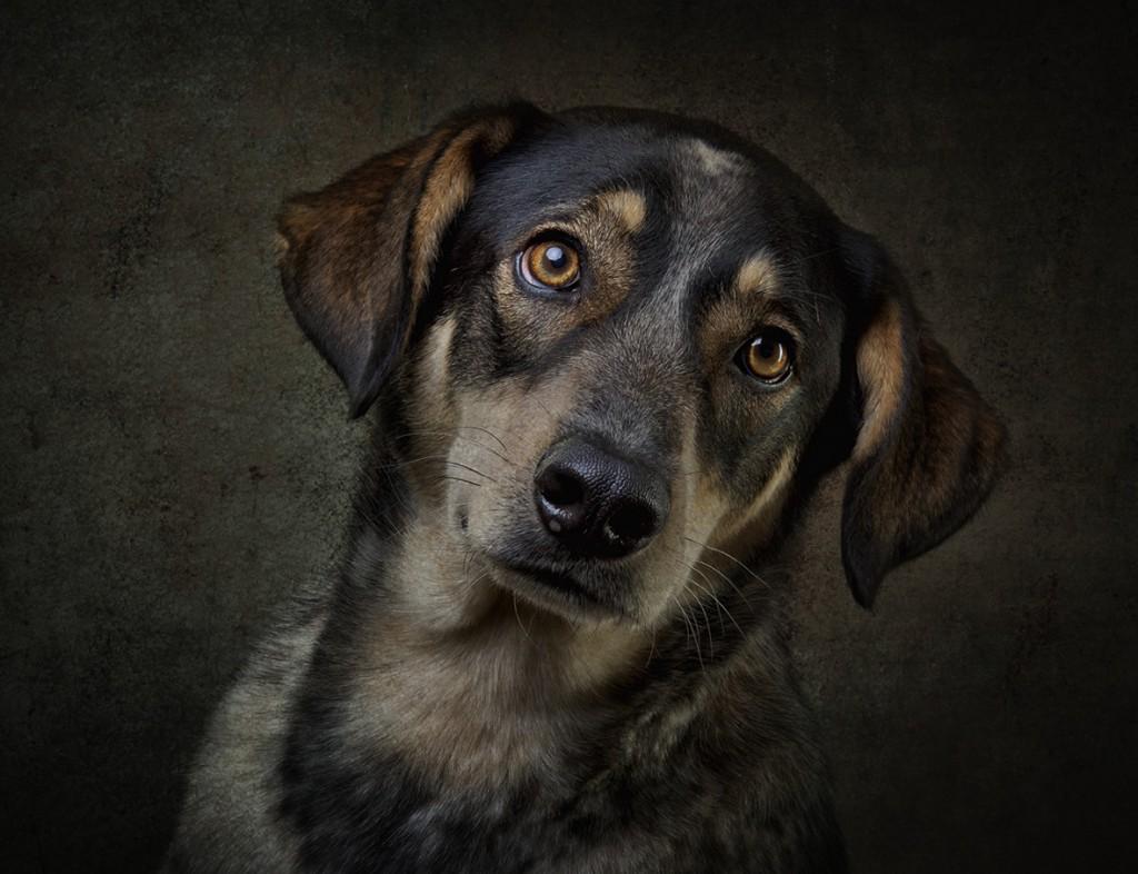 Hunde von Uli Stein-04