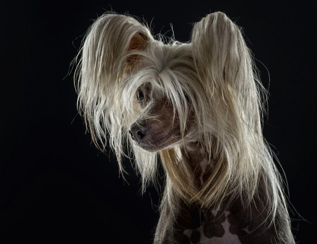 Hunde von Uli Stein-06