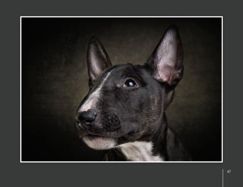 Hunde von Uli Stein-07